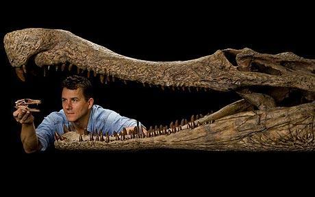 Dinosaur Era Crocodile Fossil