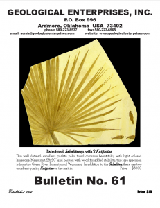 Fossils For Sale Bulletin #61
